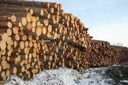 ПРОДАМ оптом: лес,  дрова,  брус,  доска